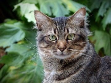 Denuncian el envenenamiento de gatos en Córdoba