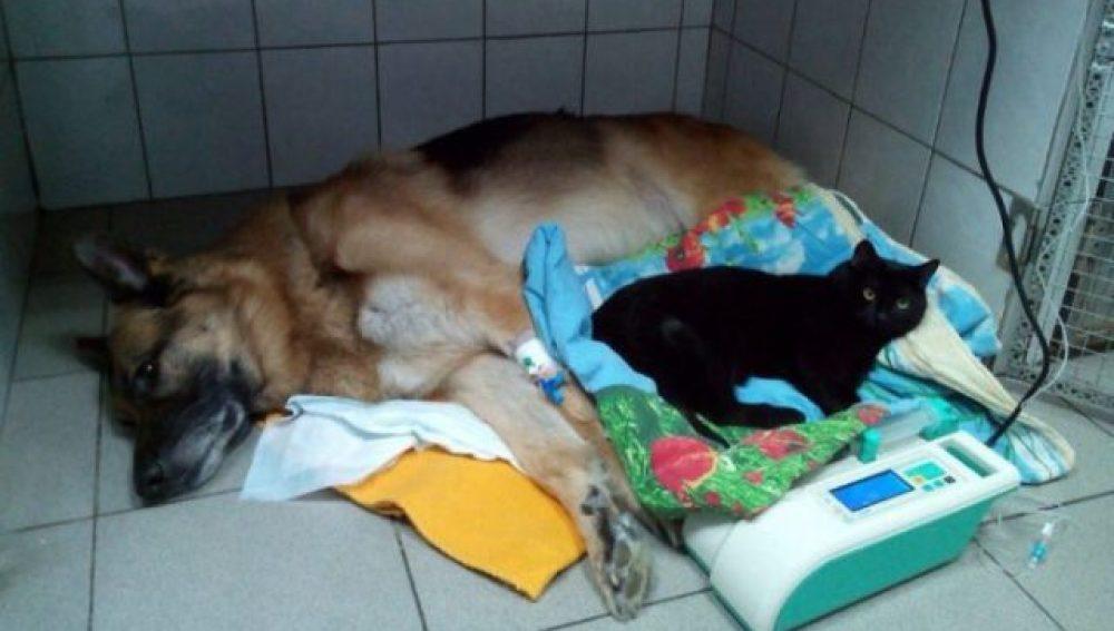 Luc cuida de uno de los pacientes de la clínica veterinaria