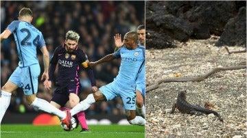 Curiosa comparación de una iguana con Leo Messi
