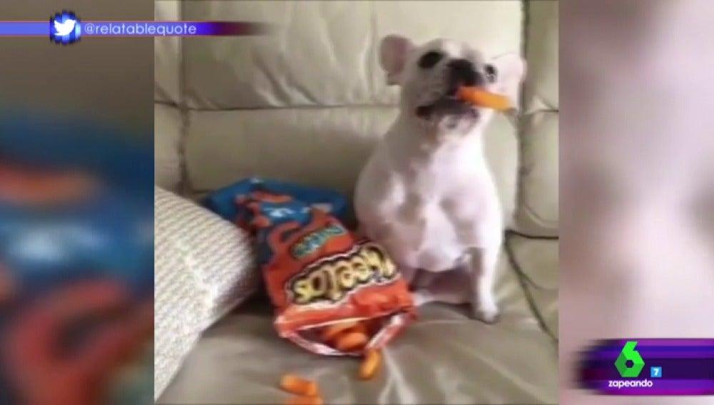 Frame 31.34851 de: perros Mannequin Challenge
