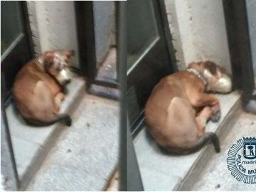 Uno de los perros rescatados estaba amordazado en la terraza