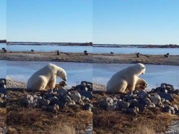 Un perro y un oso polar se hacen amigos