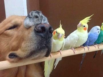 Bob y sus amigos animales