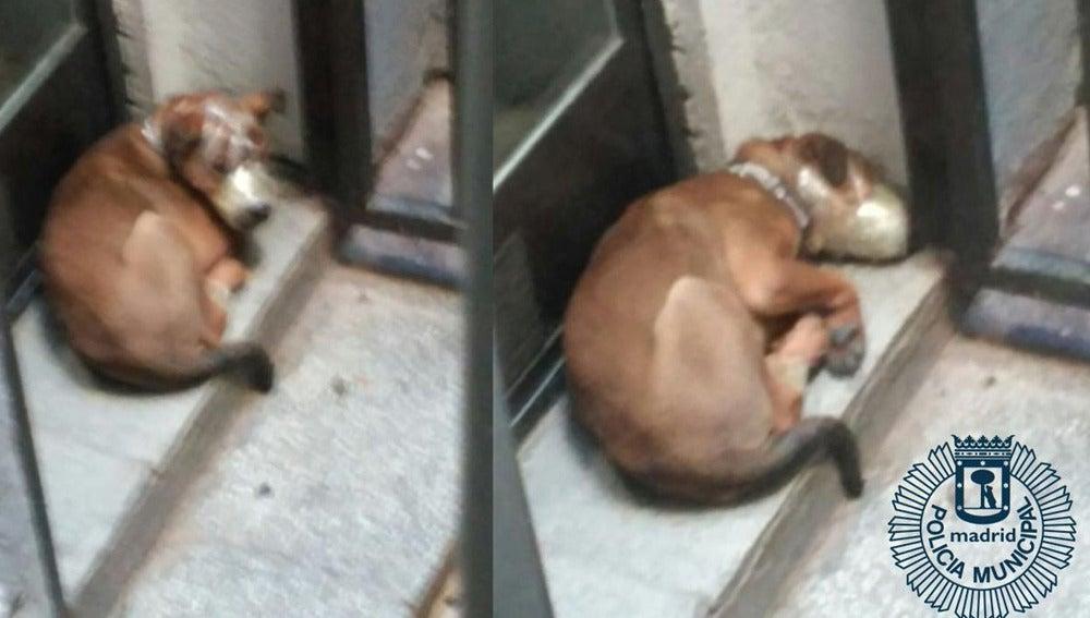 Perro con el hocico atado en un municipio de Madrid