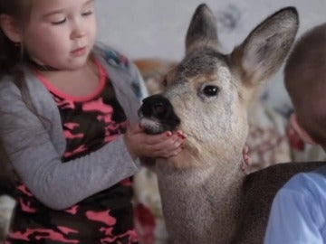 Una familia rusa adopta un ciervo herido y lo convierte en su mascota