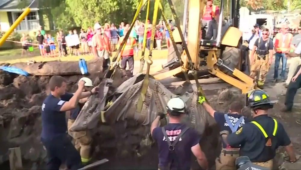 Rescatan a un manatí atrapado en un desagüe