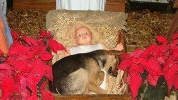 La imagen del cachorro junto al pesebre de paja del Belén