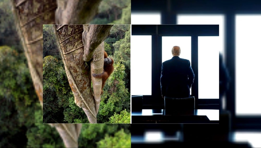 Un primate VS Donald Trump en el duelo de imágenes National Geographic-Reuters