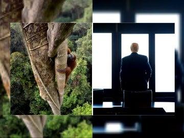 Un primate VS Donald Trump en el duelo de imágenes National Geographic-Reuters