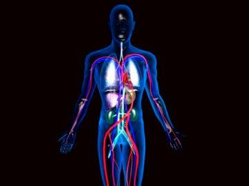 Recreación del cuerpo humano en 3D