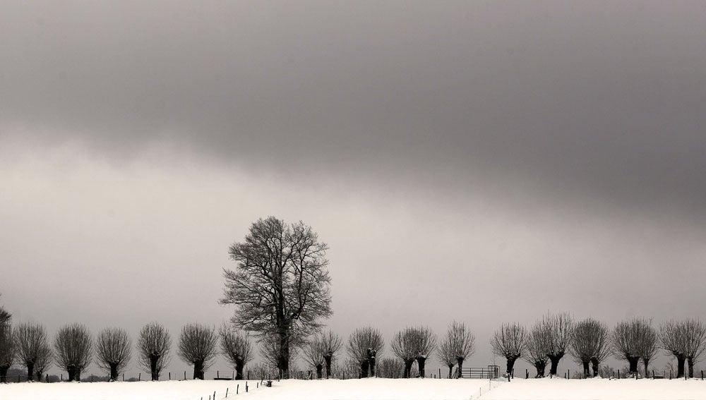 Árboles en Roncesvalles