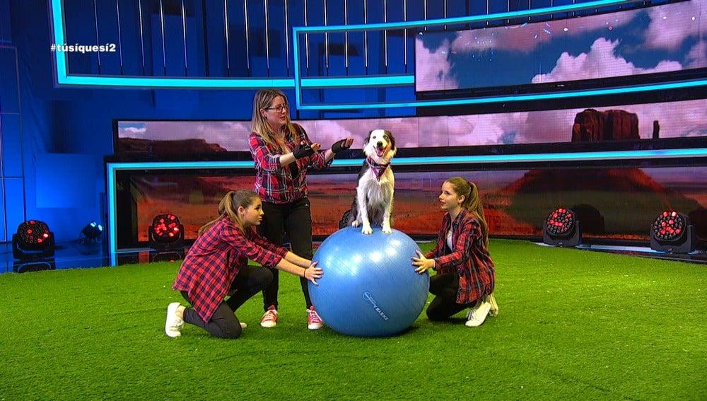 Funny dogs en TSQS