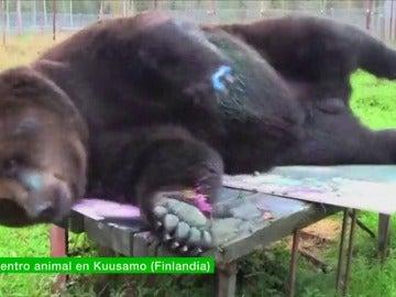 Frame 10.5737 de: Jusso, el oso que pinta cuadros de 4.000 euros