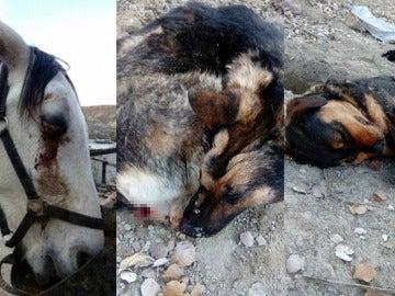 Animales agredidos por un grupo de cazadores en Granada