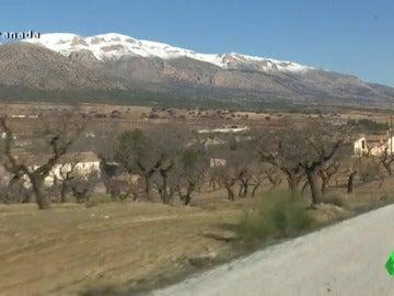 Frame 96.86204 de: Almendros de laboratorio, la fiebre por la almendra se expande en España