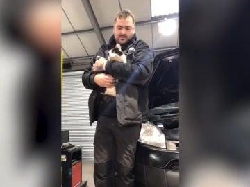 La gata Daisy en el momento de ser rescatada