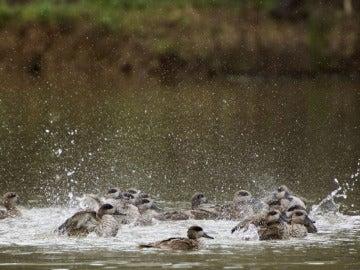 Aves en Doñana