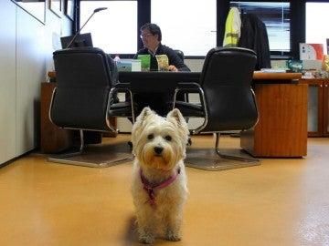 Perro en la oficina con su dueño