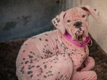La conmovedora historia de Asia, la perra que fue abandonada por tener un color piel distinto