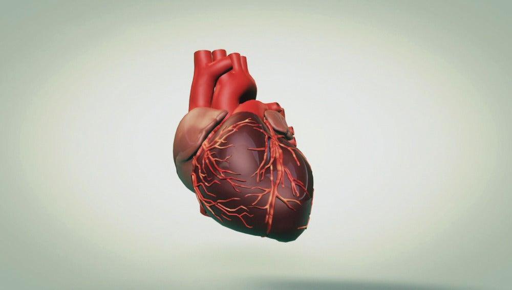 TECNOXPLORA | ¿Por qué late el corazón?