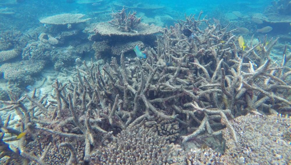 Blanqueamiento de la Gran Barrera del Coral australiana
