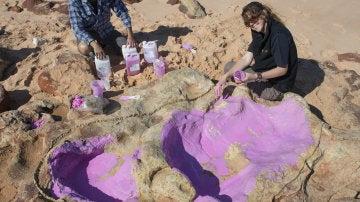 Fotografía facilitada por la Universidad de Queensland de científicos creando un molde de silicona en la huella de un dinosaurio.