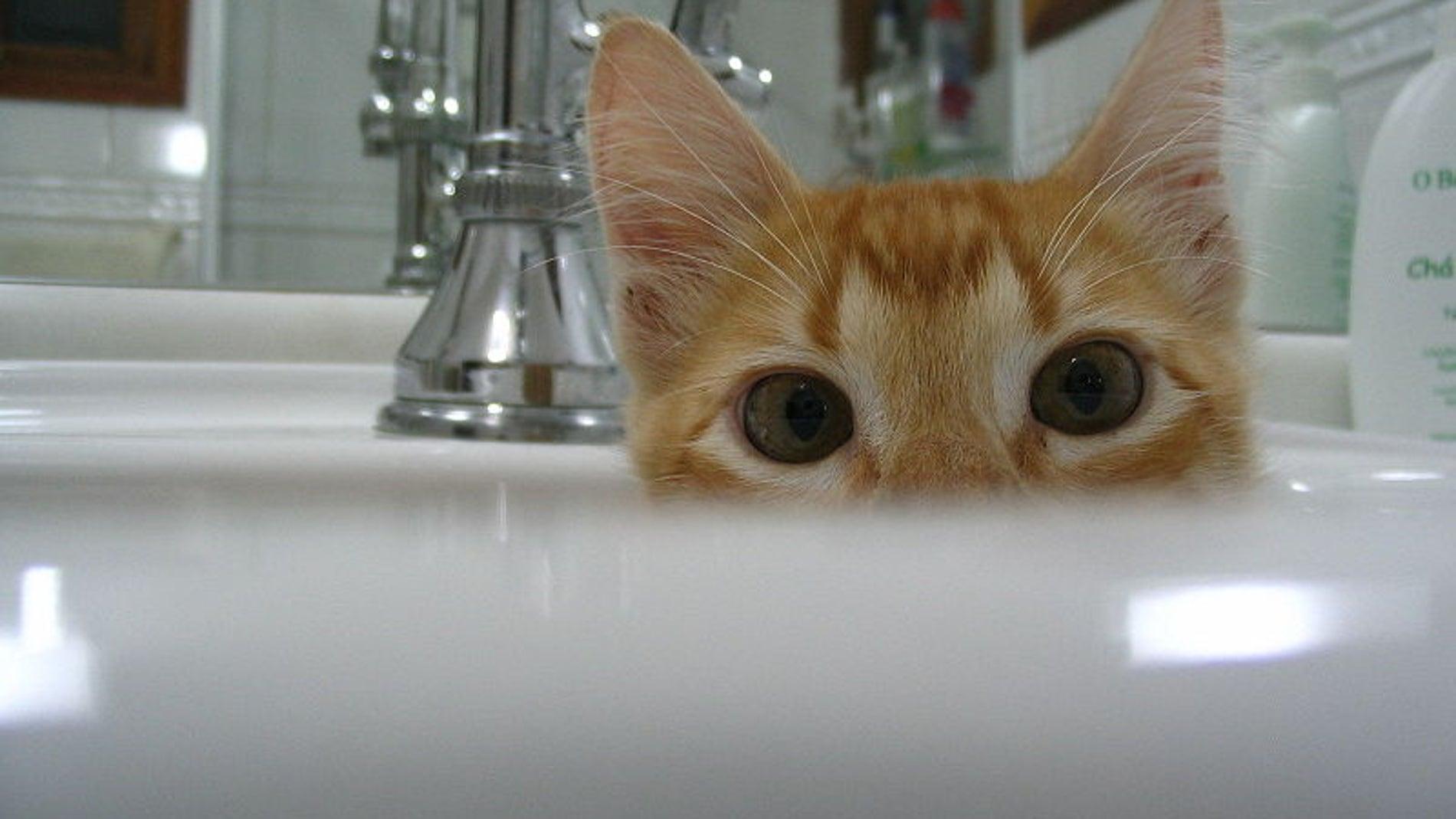 Los gatos son muy parlanchines, solo hay que saber identificar si te están saludando o echando la bronca porque no les queda comida