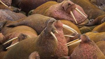 Proponen proteger como Patrimonio Mundial siete areas marinas en el Artico