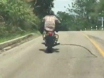 Frame 6.170528 de: Las sorpendentes imágenes de una serpiente que se lanza a morder a un motorista en mitad de la carretera