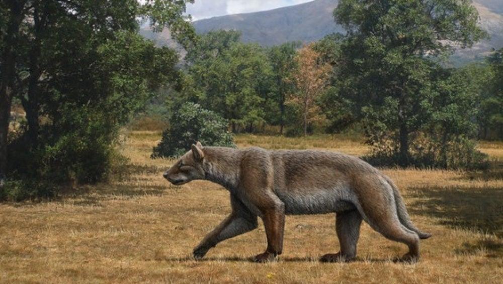 Asi cazaba uno de los grandes depredadores del Mioceno en la peninsula iberica
