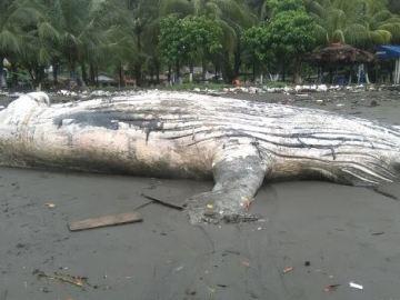 La ballena varada