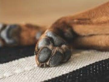 Pata de perro
