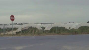 Campos de fresas en Doñana