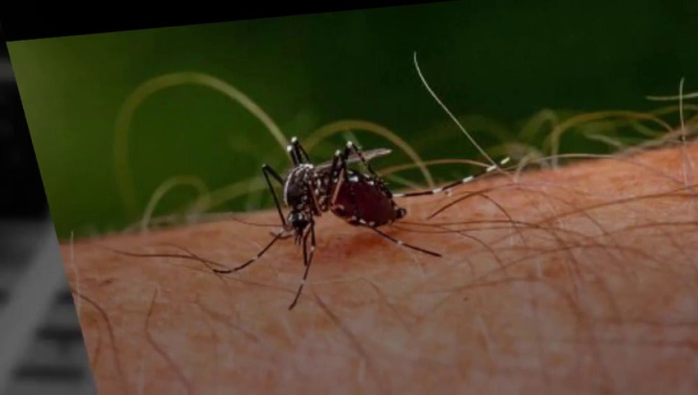 Frame 6.760645 de: 5 razones por las que podrías estar atrayendo a los mosquitos