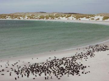 Pingüinos bahía de Yorke
