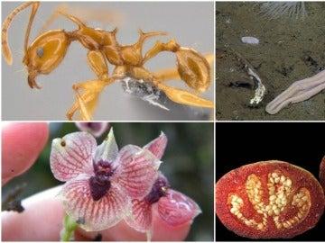Top 10 de las nuevas especies animales y vegetales