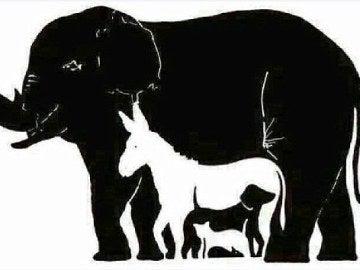 El reto visual de los animales