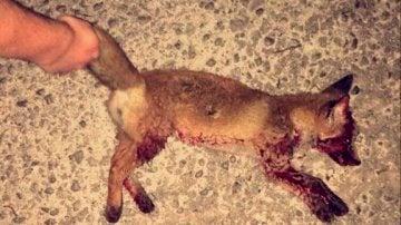La foto del zorro muerto publicada en las redes sociales