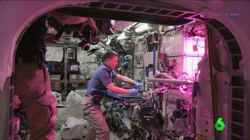'Seedling Growth 3', el proyecto espacial que intenta descubrir un método para que las plantas crezcan en el espacio