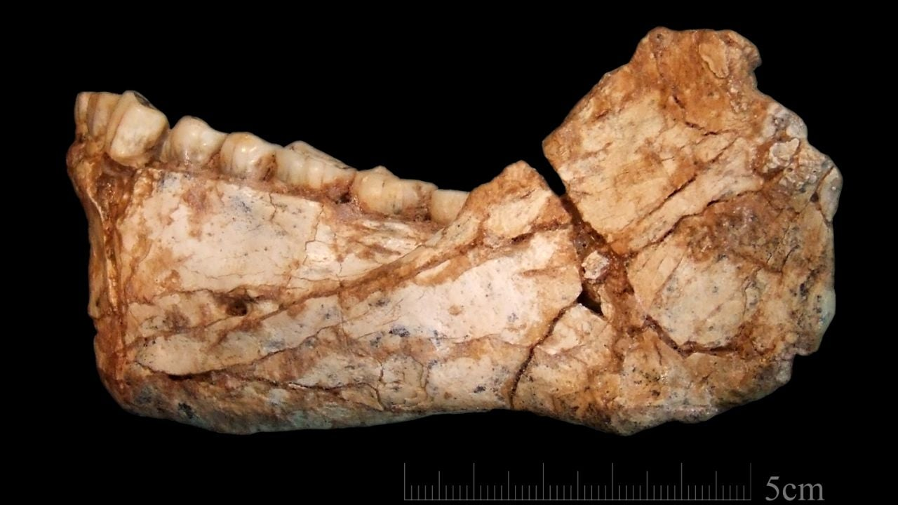 La aventura del Homo sapiens empezo antes de salir de Africa