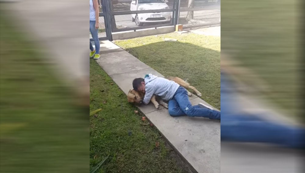 Reencuentro de un menor con su perro