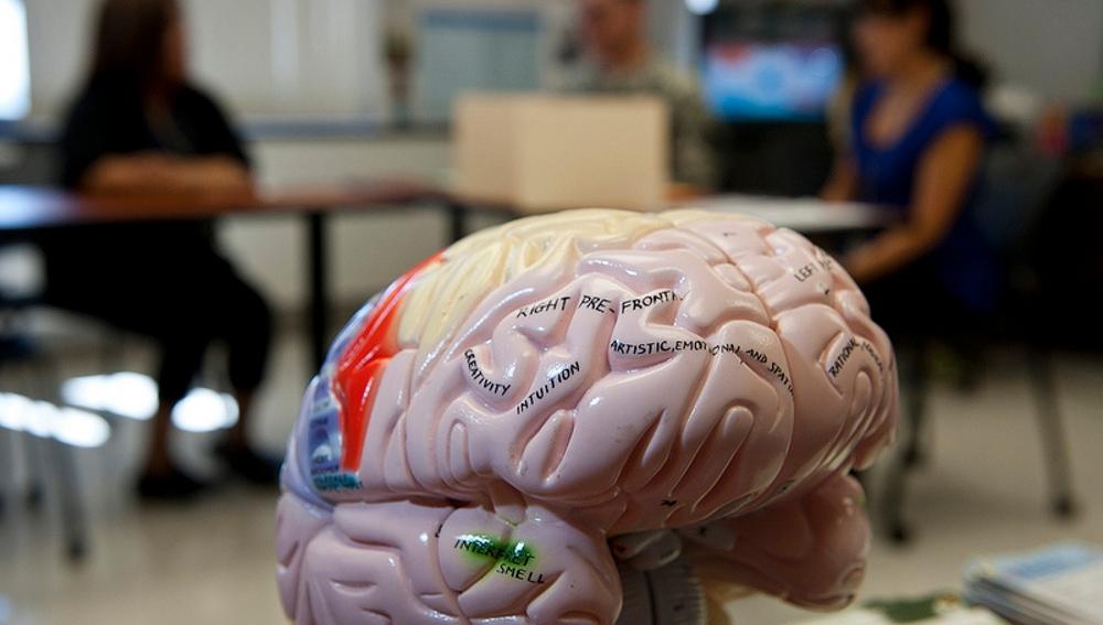 El cerebro es capaz de cambiar rápidamente el foco de atención, pero no de mantenerlo en dos sitios a la vez