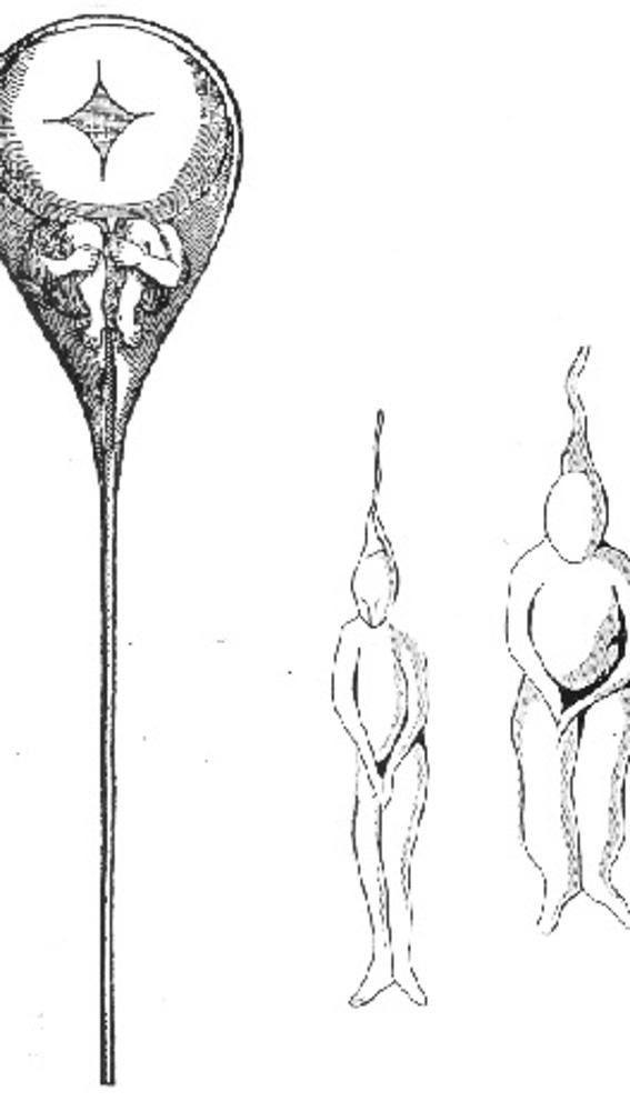 Dibujo de Nicolaas Hartsoeker, quien fabricó su propio microscopio rudimentario