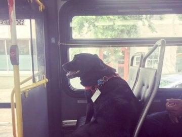 Eclipse viajando en autobús.