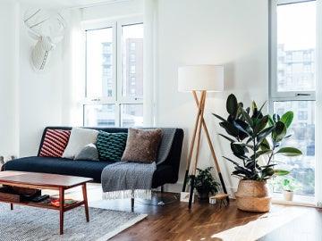 Planta que purifica el aire de tu hogar