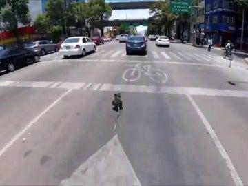 Un hombre se juega la vida para salvar a un perro que se coló en una autopista
