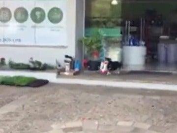 Pituco, el perro que acude solo a comprar su comida