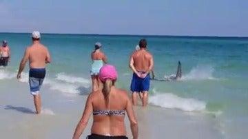 Tiburones en Florida