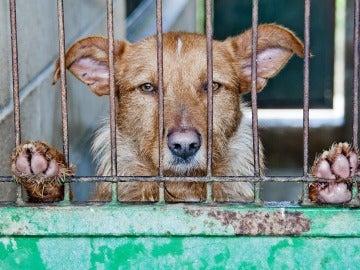 Más de 137.000 animales abandonados en 2016 en España