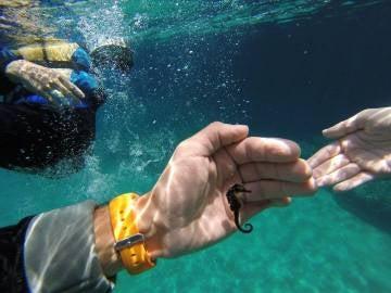 Caballito de mar en aguas de Xàbia